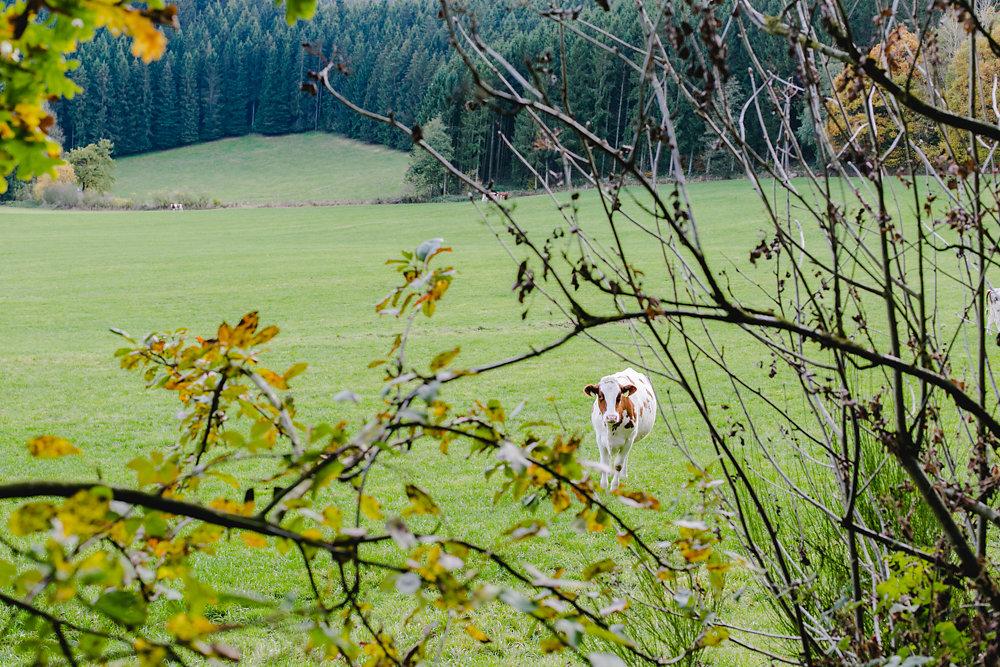 Sauerland-Wald-Spaziergang-Eslohe-Hochzeitsfotografie-Bochum-16.jpg